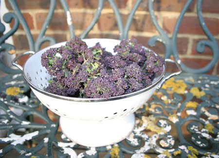 Purple-broccoli