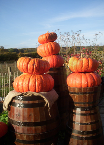 Big-pumpkins