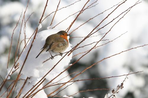 Tree-robin