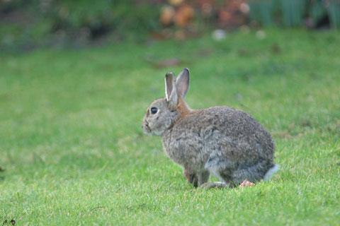Bunny-one