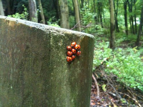 Ladybird-cuddle