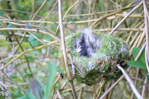 Moss-nest