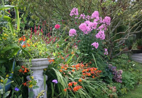 Fi's-garden