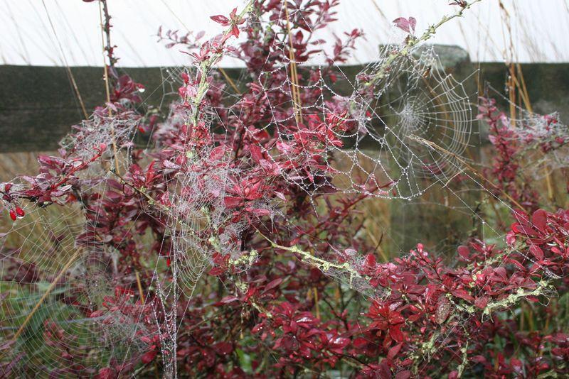 Webs 2