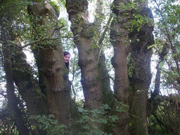 One-tree-many-trunks