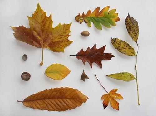 Leaves,-leaves