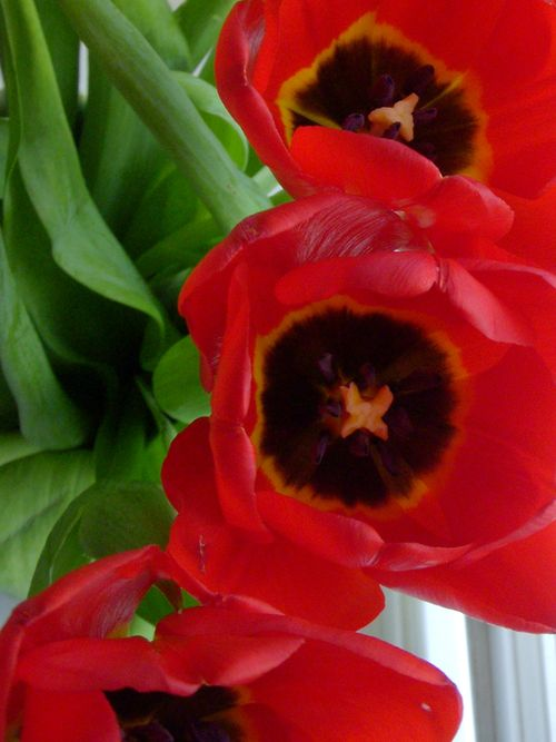 First-tulips