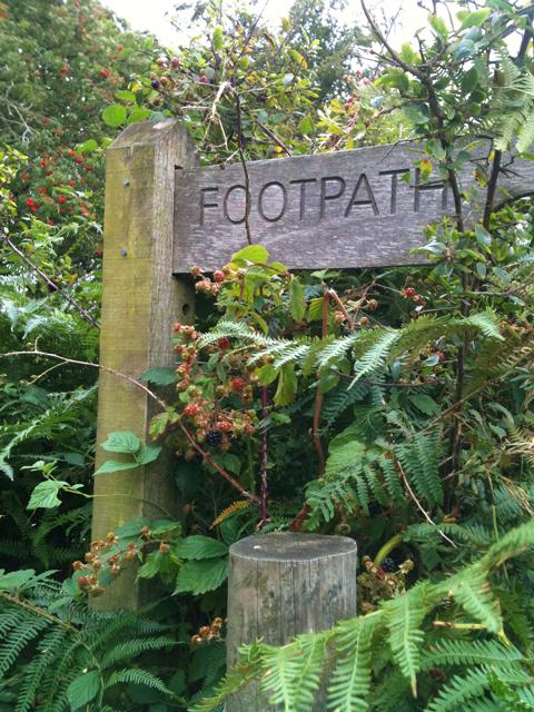 Footpath-&-blackberries