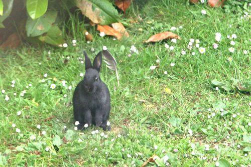 Black bunnies!