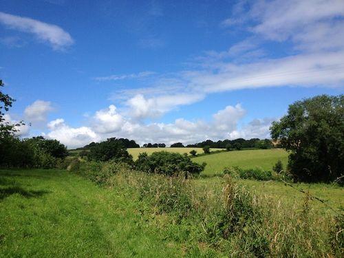 Snny fields