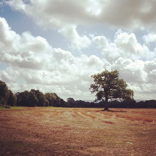 Loan oak
