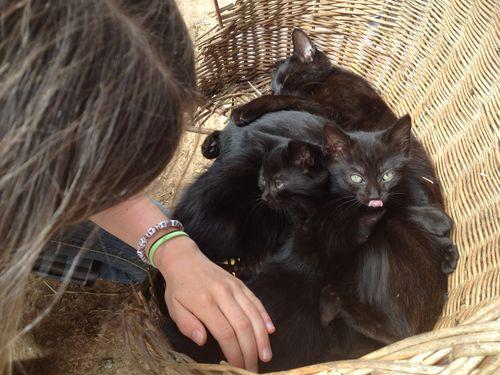 Parcel of kitties