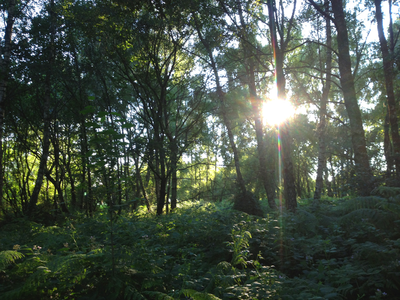 Woods & rays