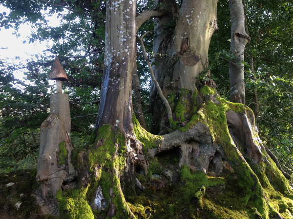 Mossy-roots