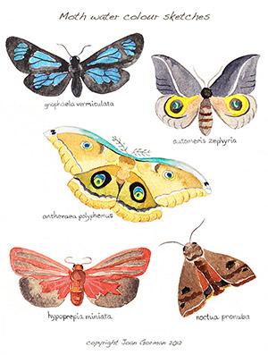 Moth watercolour sml sample