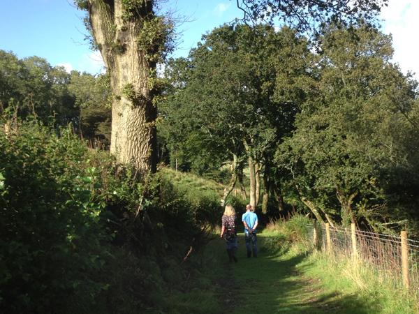 Devon-walk