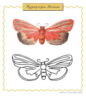 Hypoprepia Moth sample