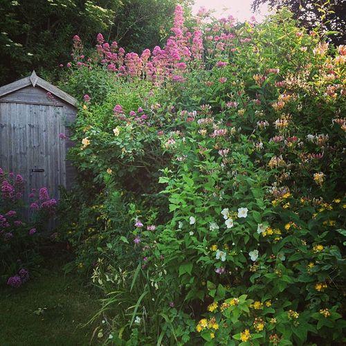 Overflowing garden