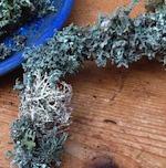 Lichen wreath icon