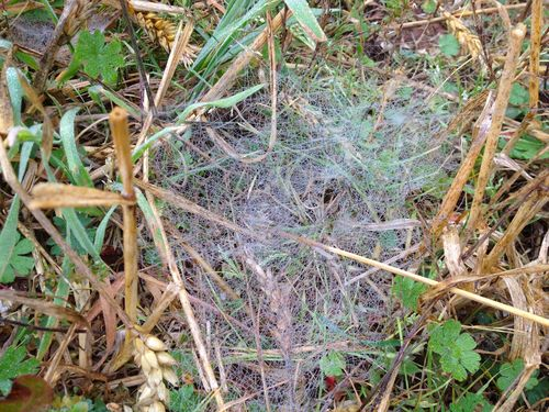 Fishing line web