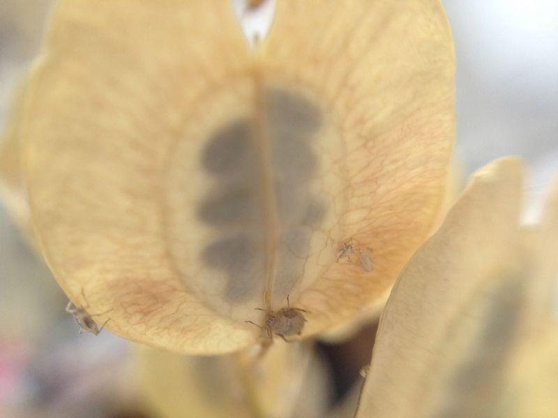 Unknown seed pod