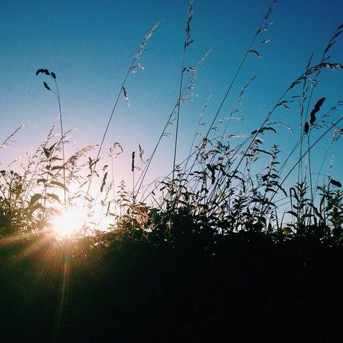 Hedgerow_grasses