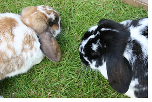 2_bunnies