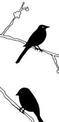 Birdweb_2